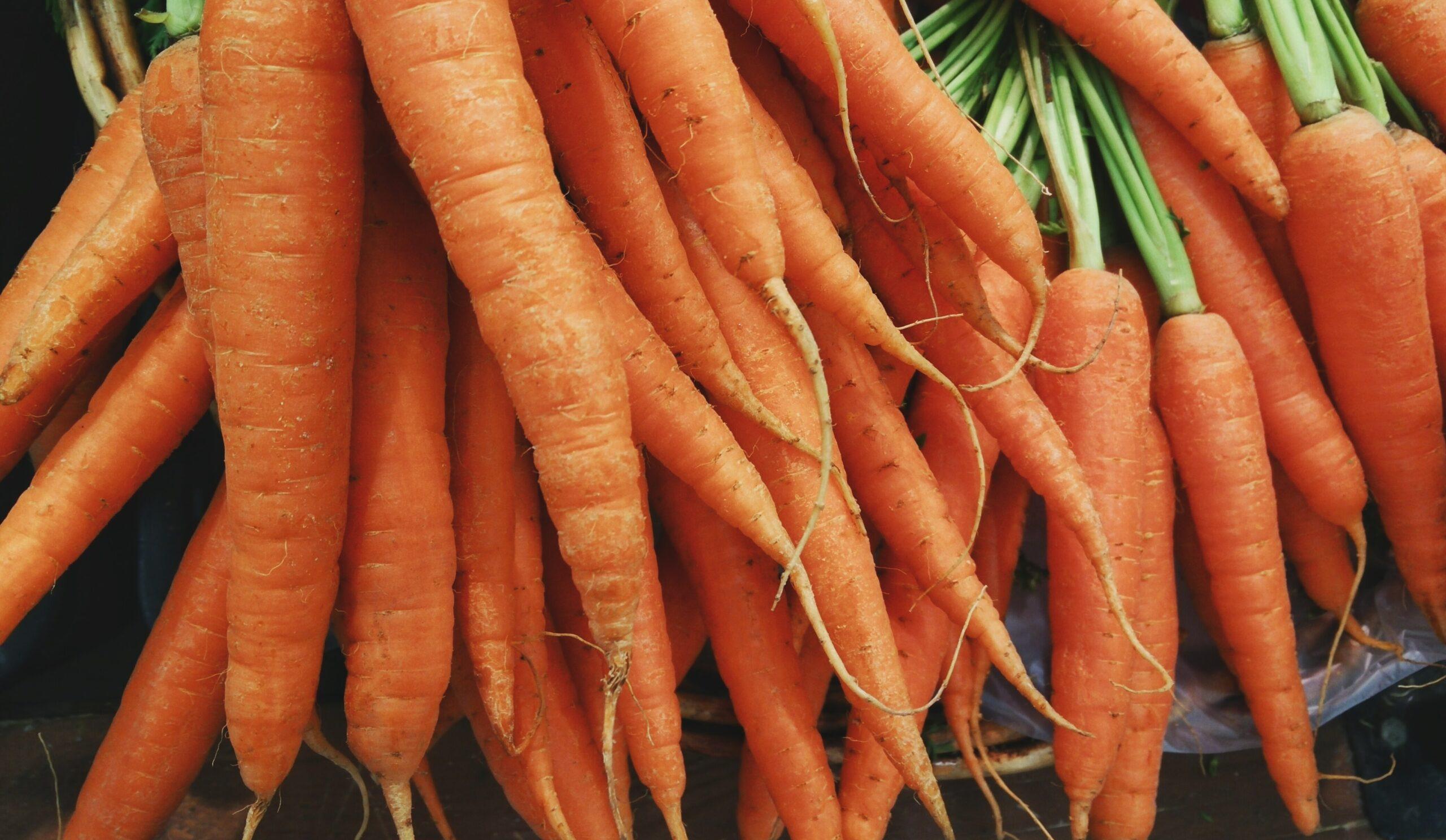 Carrots for Santa's reindeer